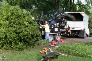 tree removal services in east tennessee