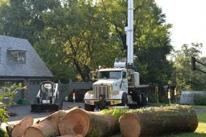 East TN Tree Service & Tree Removal in Knoxville, TN