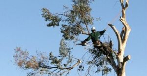 Tree Removal High Climber