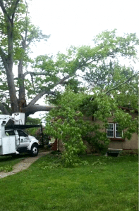 tree removal & tree service in knoxville tn