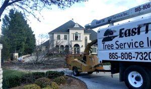 tree removal & tree service
