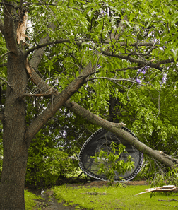 fallen tree and lawn debris after storm