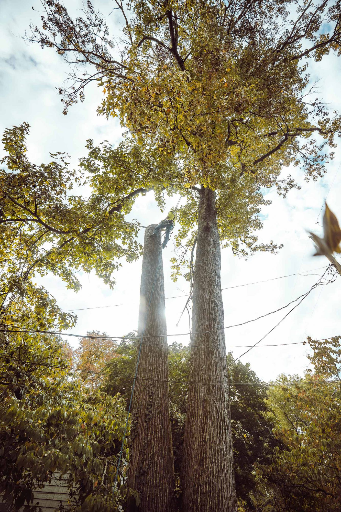 tree removal services knoxville tn
